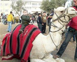 Адам на верблюде