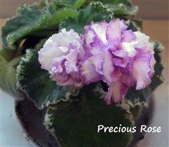 Precious Rose