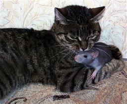 кошки-мышки5