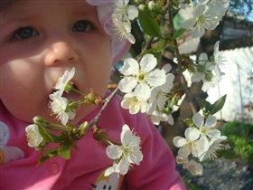 вкусные цветочки