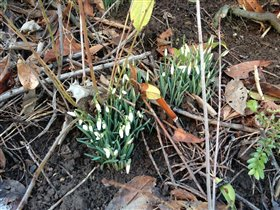 и ещё весна:)