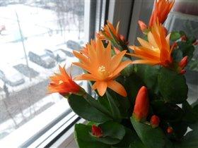 Цветение в подарок к 8 Марта