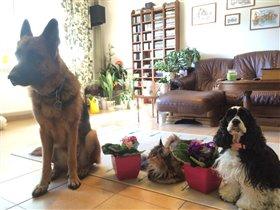 Тина и собаки