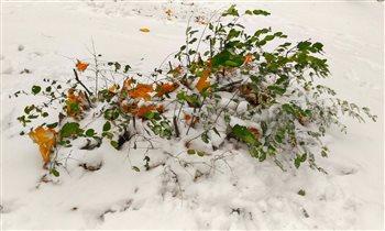 Первый снег в Череповце