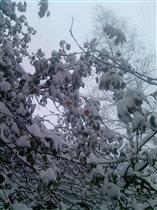 Яблони в снегу-какое чудо !