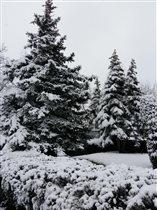 Ноябрь. Снег и у нас снег.