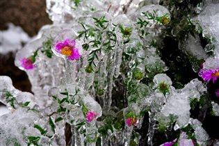 Хрустальные цветы