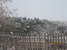 Сирень под снегом
