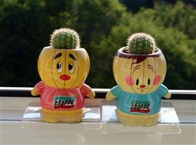 дружные кактусята