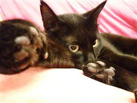 Задумчивый кот