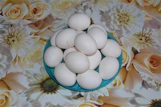 Яйцо домашнее от своих несушек. Цена 50р