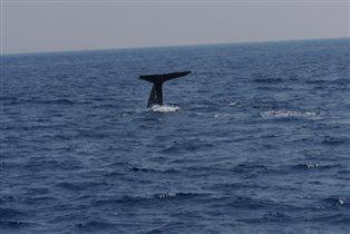 Большой китовый привет!