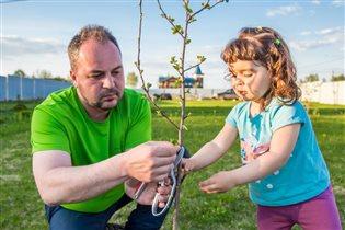 Папа и дочка бережно ухаживают за садом