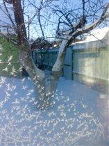 Снежные бабочки