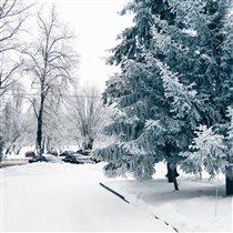 Харьковская зима