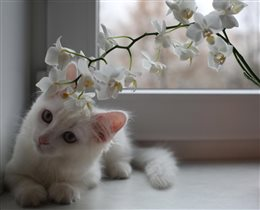 Снежок и орхидея