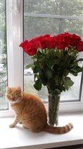 Букет для любимой кошки)
