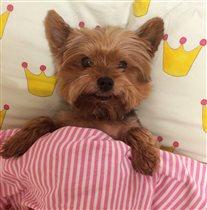 Его величество ложится спать
