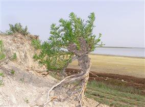 Просыпается природа возле Каркинитского залива.