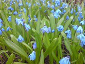 Наш сад весной