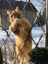 Весна! Коты прилетели!)