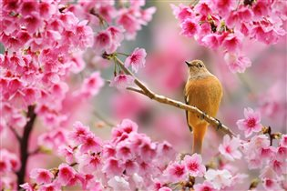 Весна пришла.