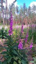 Цветочный огород в лесу