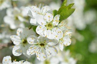 Цветочные веснушки