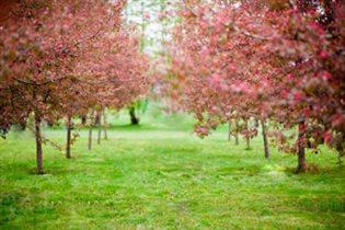 Весенний сказочный сад в Коломенском