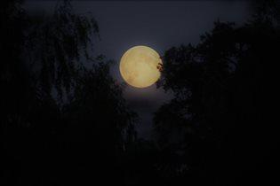 Луна в ветвях запуталась