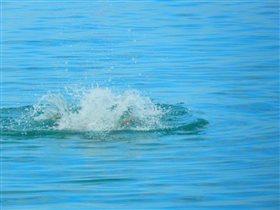Стиль ныряния 'сделай лебедя'