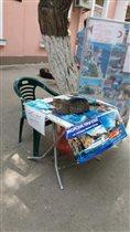Кот продает экскурсии