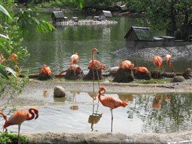 Стоит фламинго в зоопарке.