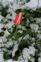 Весна приходи!!!