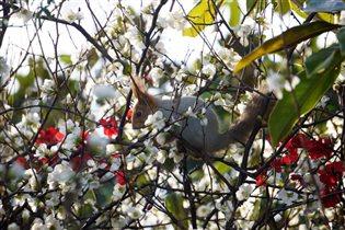 Белочка кушает весенние цветочки)))