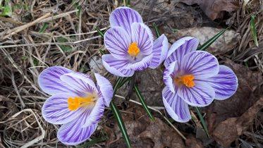 Апрельские первоцветы в парке на Яузе)))