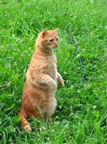 Ступень эволюции - кот прямоходящий
