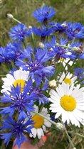Букет из любимых цветов