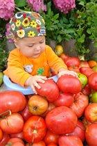 Раз помидорка, два помидорка, маме помога на зиму