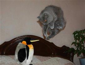 Про то, как пингвина учили летать