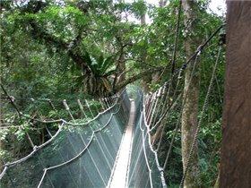 Подвесная дорога в кронах деревьев