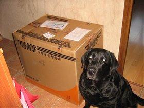 Посылка в 13,84 кг