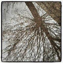 Весна-Бриз instagram. leonidevteev.ru