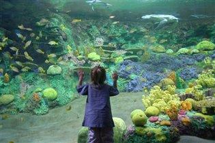 Подводный мир во всей красе