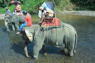 катание на слонике