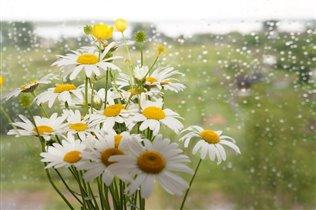 Дождь плачет за окном, а дома яркие ромашки