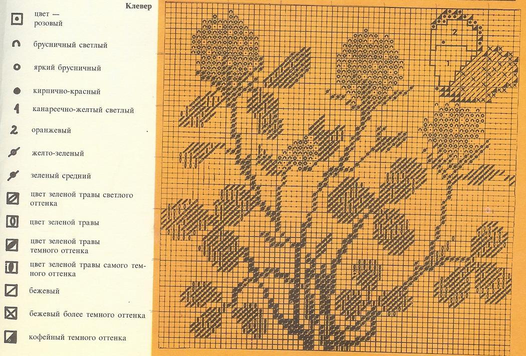 Клевер. Цветы