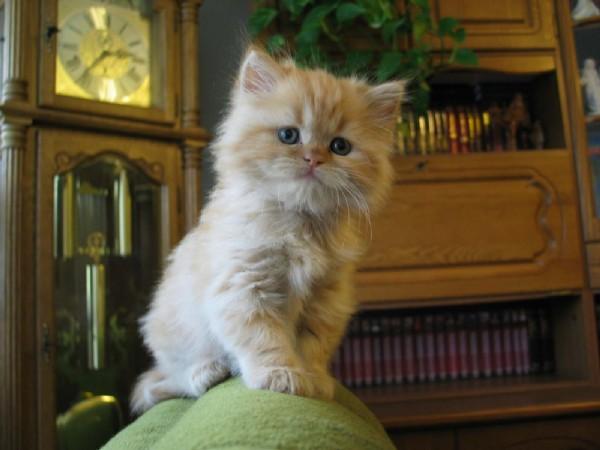 Я тут главный.  Котята
