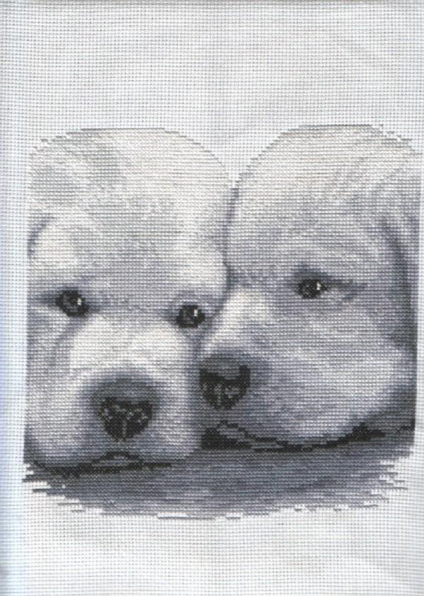Loving Puppies.