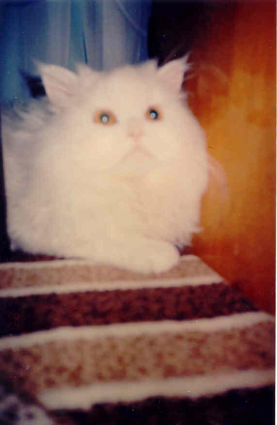 наш Мартын.  Котята